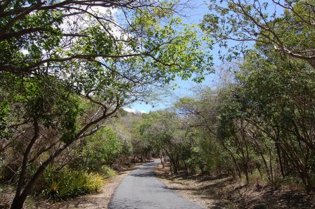 Puerto Rico - Guanica Dry Forest